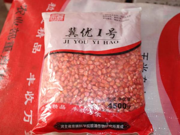 高产玉米种子供应